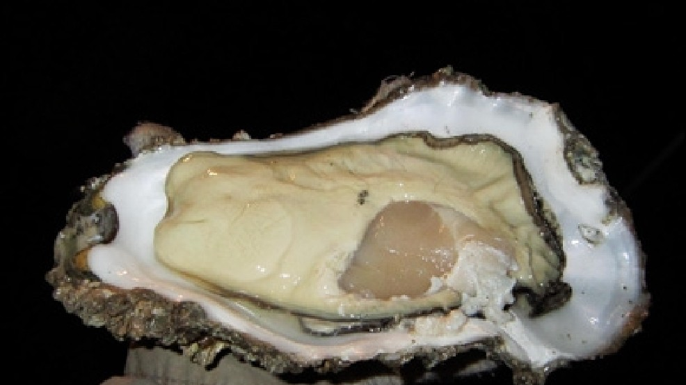 FDA: Frozen oyster recalled after norovirus cases | KVAL