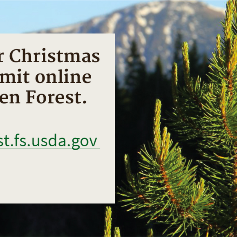 Oregon Christmas Tree Permits 2020 Permits to cut Christmas trees from Willamette National Forest now